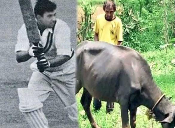 भारत को विश्व विजेता बनाने वाला यह क्रिकेटर अब जीविका चलाने के लिए भैंस चराना किया शुरू 1