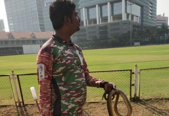 रणजी ट्रॉफी 2019-20: मुंबई-कर्नाटक मैच के अंतिम दिन मैदान पर मिले दो सांप फिर हुआ कुछ ऐसा 23