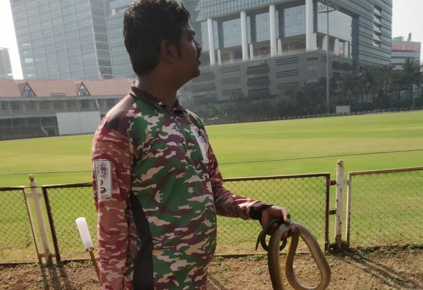 रणजी ट्रॉफी 2019-20: मुंबई-कर्नाटक मैच के अंतिम दिन मैदान पर मिले दो सांप फिर हुआ कुछ ऐसा